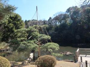 Japanese garden (Inside garden) in Meiji shrine