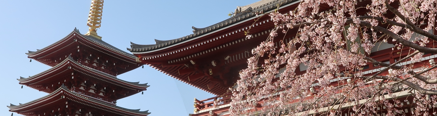Cherry blossoms and 5 stories pagoda