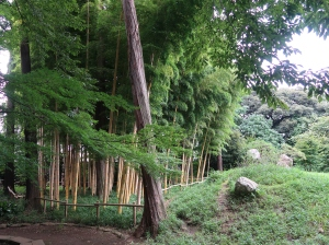 Phyllostachys/ Asian bamboo/ タケ 竹