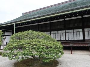 大宮御所 松竹梅の庭の梅 Japanese apricot in the garden pine, bamboo and Japanese apricot, in Omiya palace