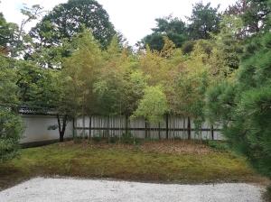 大宮御所 松竹梅の庭の破竹(呉竹)Henon bamboo, in the garden pine, bamboo and Japanese apricot, in Omiya palace