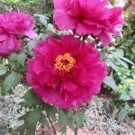 Similar flower